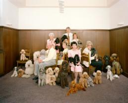Inszeniertes Gruppenbild von Mitglieder von einem Pudelclub. Angeordnet wie ein klassisches Familienbild sitzen und stehen die Männer und Frauen in einem kleinen Saal mit braunem Täfer. Neben ihnen und um sie herum sind viele verschiedene Pudels.